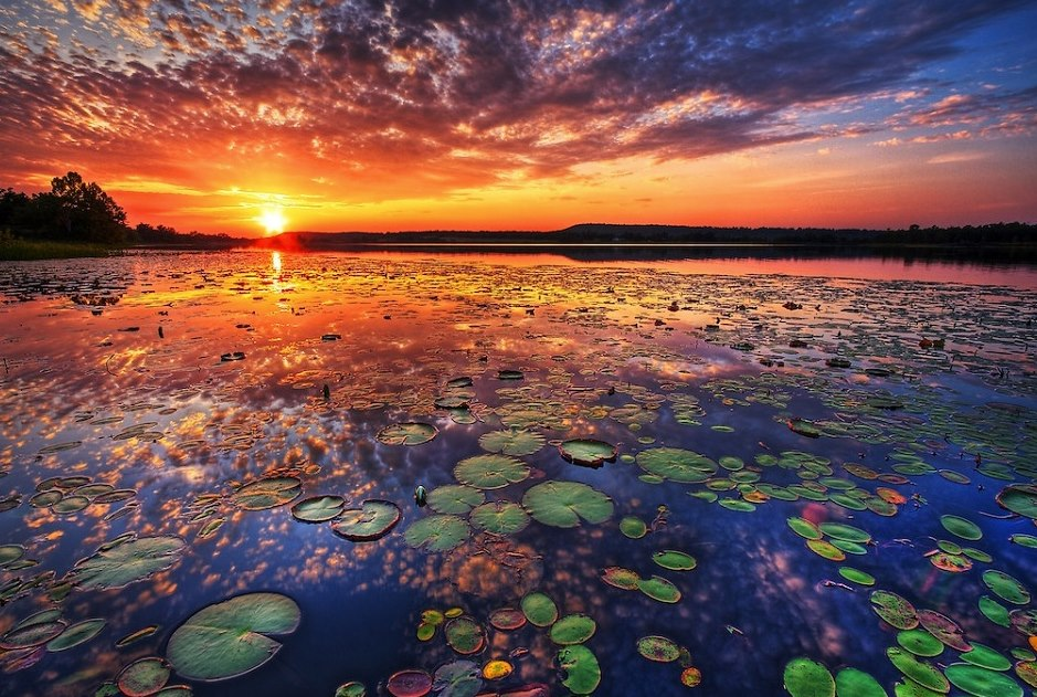 lily-pad-sunset